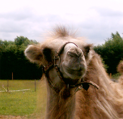 Camel07